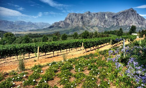 Cape Winelands, South Africa, Africa