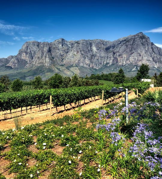 Cape Winelands in South Africa