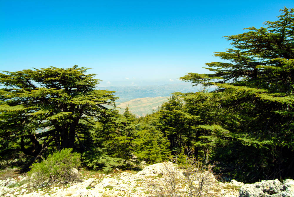Cedars, Chouf Mountains, Lebanon