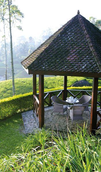 Tea Trails, Hatton