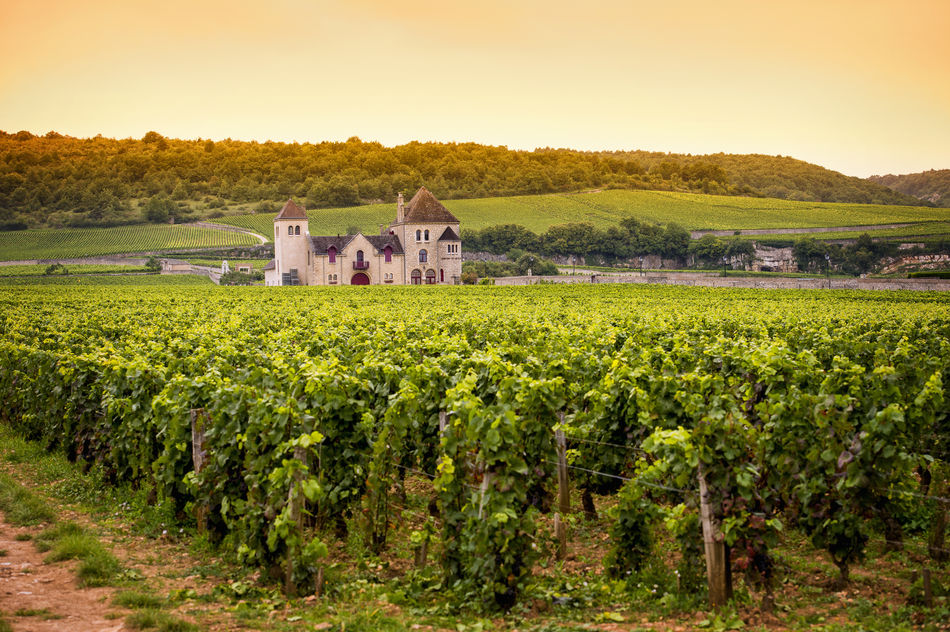 View of a chateau over vineyards in Burgundy