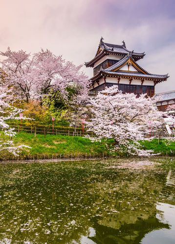 Cherry blossom season and Koriyama Castle in Nara, Japan
