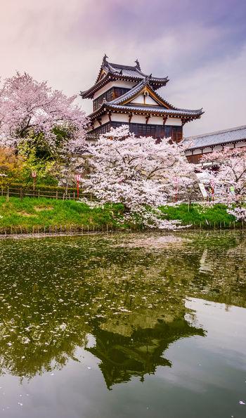 Cherry blossom season and Koriyama Castle in Nara, Japan