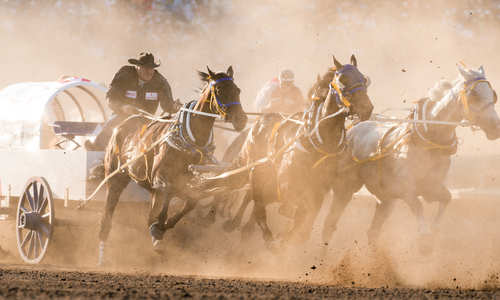 Chuckwagon Racing, Calgary Stampede