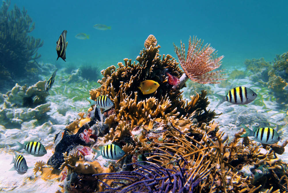 Coral reef, Antigua