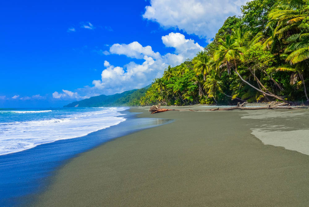 Corcovado rainforest meets the beach, Costa Rica