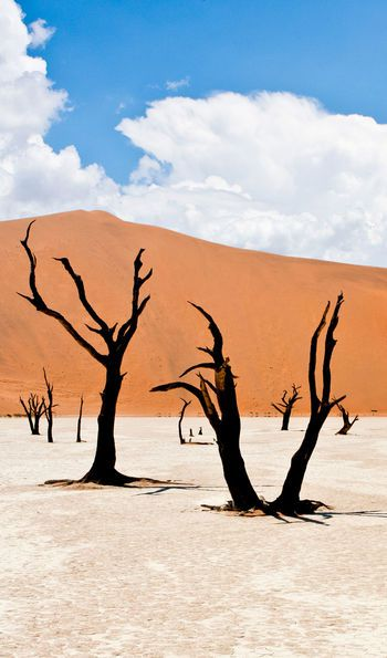 Sossusvlei's salt pans are punctuated with gnarled dead trees