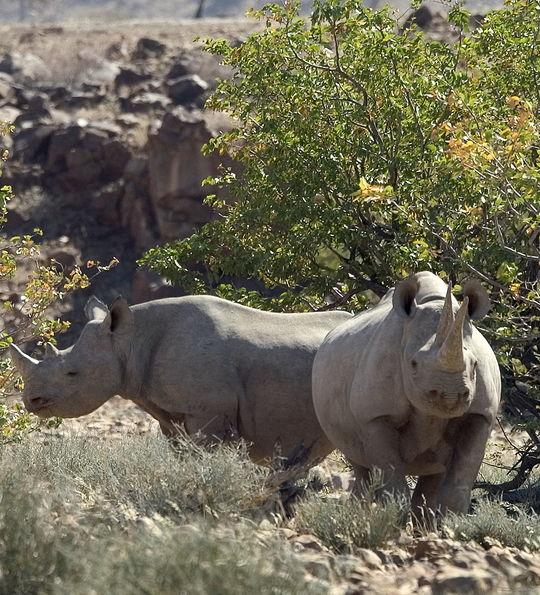 Desert Rhino Camp, Palmwag Concession, Namibia