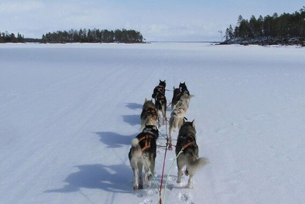 Dog Sledding, Nellim Wilderness Hotel, Lapland, Finland