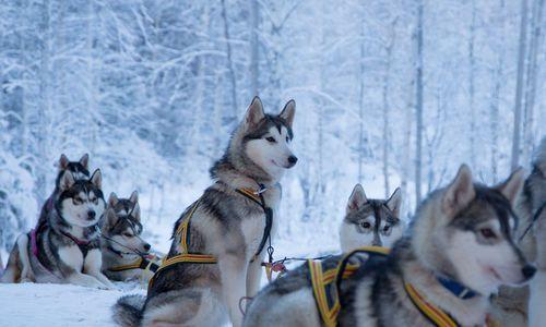 Swedish Lapland Adventure, Treehotel & Sorbyn Lodge