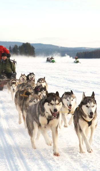 Dogsledding, Arctic Retreat