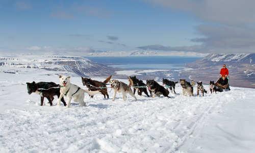 Dogsledding (Credit: Green Dog/Hurtigruten Svalbard)
