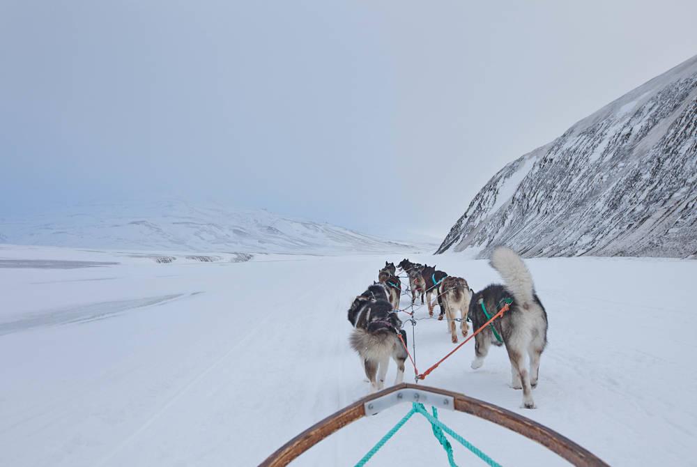 Dogsledding (Credit: Hanne Feyling/Green Dog)
