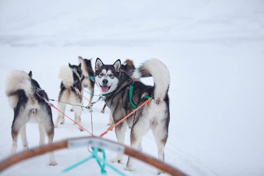 Husky Adventures in Svalbard