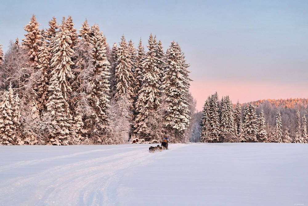 Dogsledding, Luleå