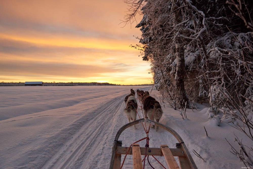 Dogsledding Luleå