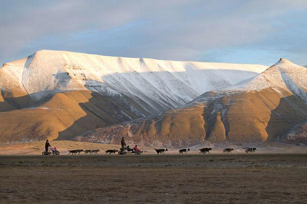 Wheeled dogsledding on Svalbard