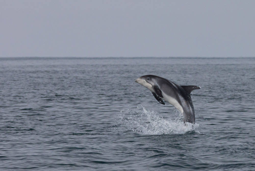 Dolphin watching Credit: Special Tours, Dagmar Federico
