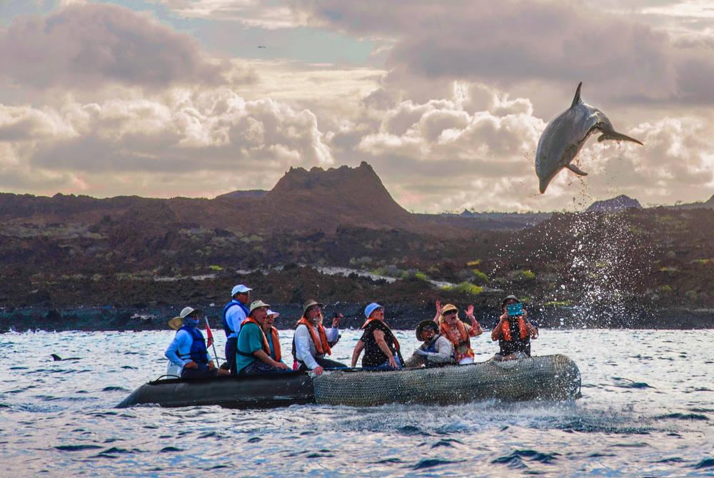 Dolphins, Isabela II Yacht, Galapagos
