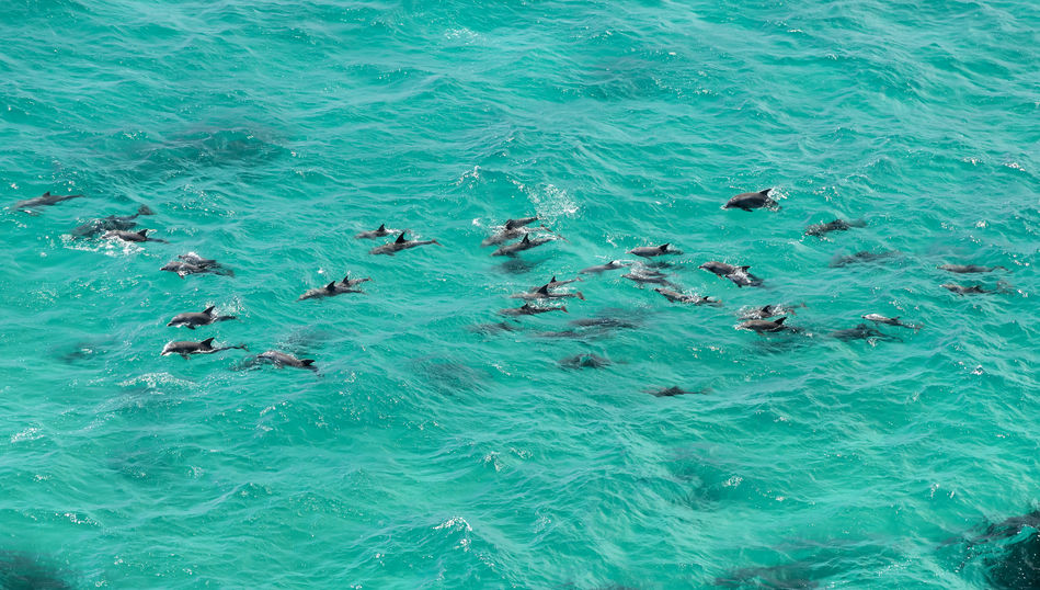 Dolphins at Port Stephens, New South Wales, Australia