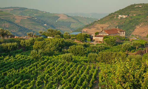 Douro Valley, Porto