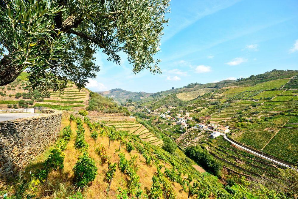 Douro Valley Vineyards near Peso da Regua, Portugal