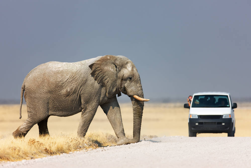 Elephant, Etosha National Park