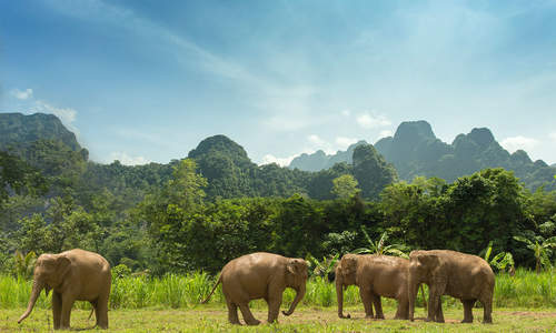 Elephant Hills Luxury Tented Camp, Thailand