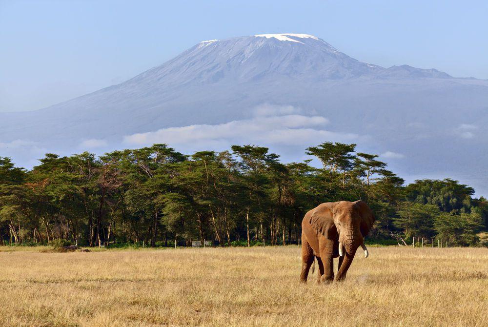 Elephant, Kilimanjaro National Park, Tanzania