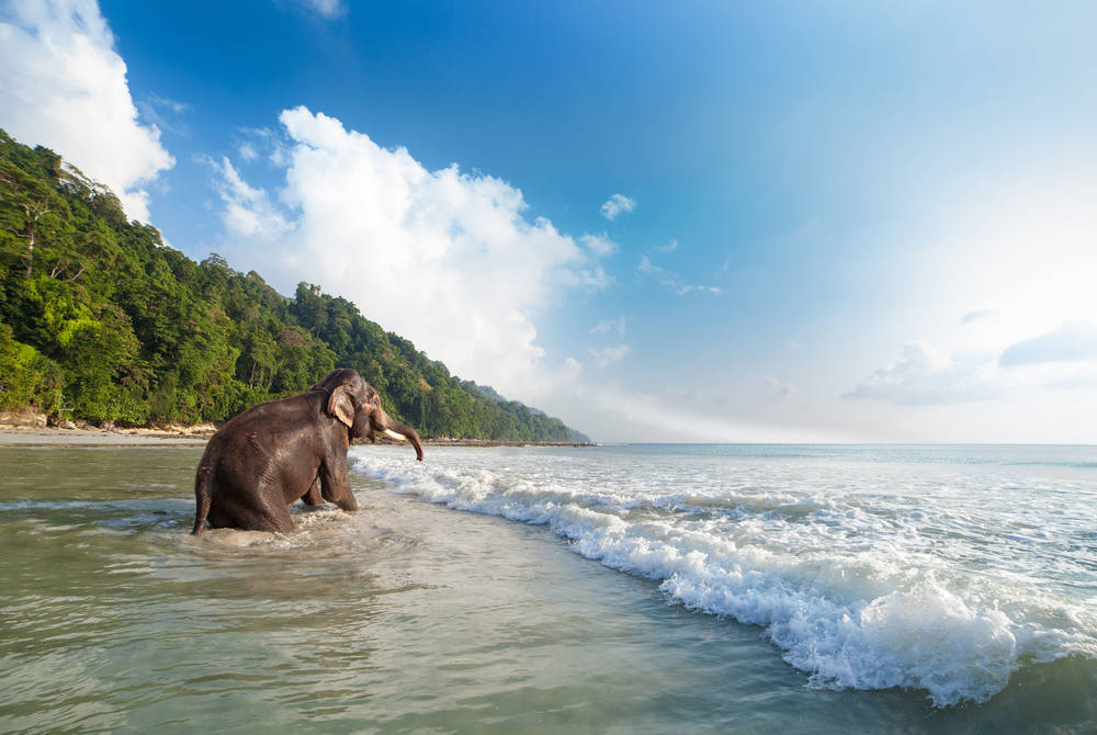 Elephant bathing, Havelock Island, Andaman Islands, India