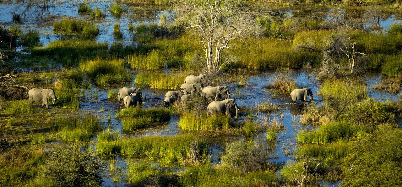 Elephant family in the Okavango Delta