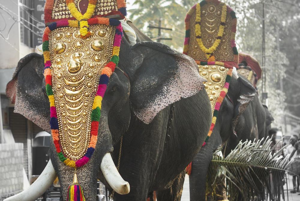 Elephants walking at the Elephant Festival, Kerala