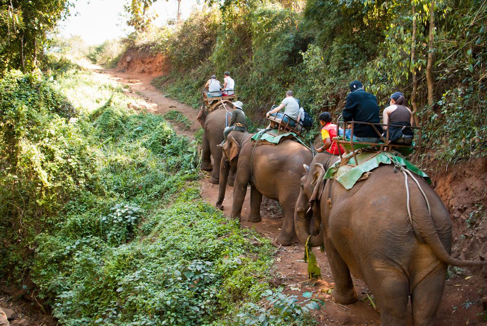 Elephant trekking in Northern Thailand