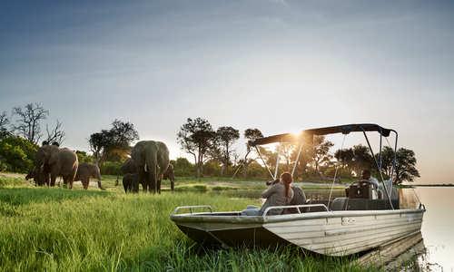 Elephants, Sanctuary Chobe Chilwero, Botswana