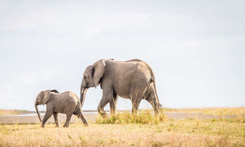 Elephants, South Africa