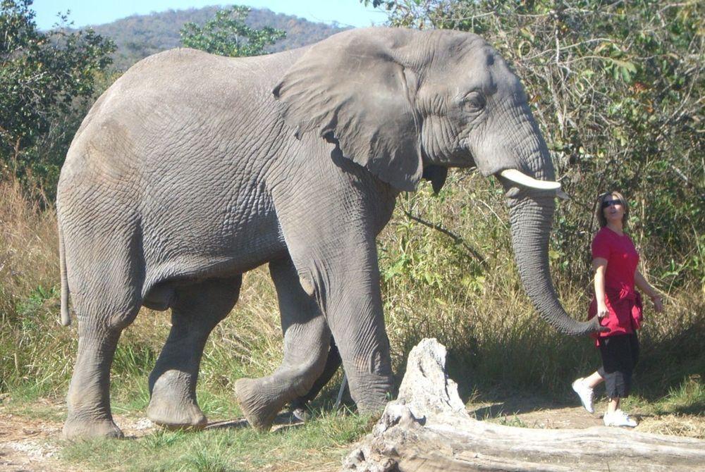 Emma - South Africa - Mala Mala