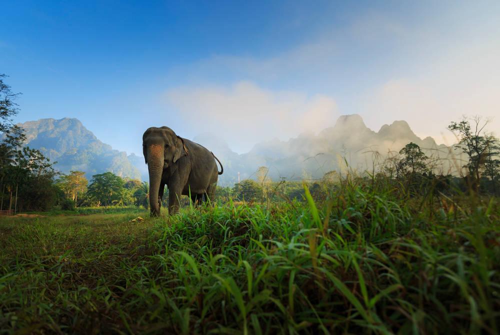 Elephant Experience, Elephant Hills Luxury Tented Camp, Khao Sok National Park Thailand