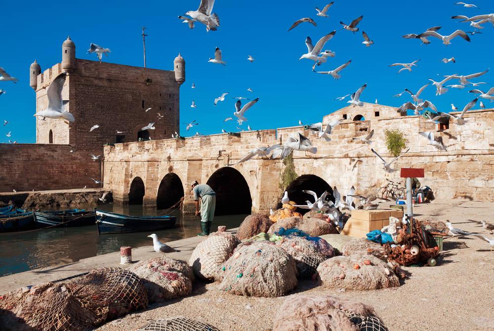 Fishing catches, Essaouira