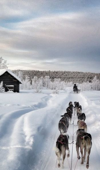 Husky sledding to Fjellborg Arctic Lodge