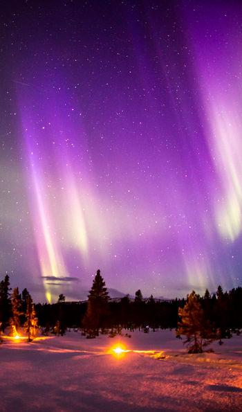 Northern Lights above Fjellborg Arctic Lodge
