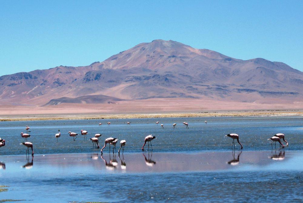 Flamencos en Tara, Atacama Desert