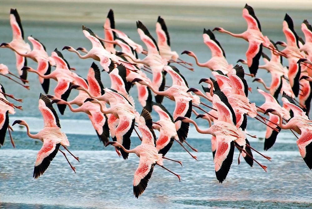 Flamingoes, Ngorongoro Crater, Tanzania