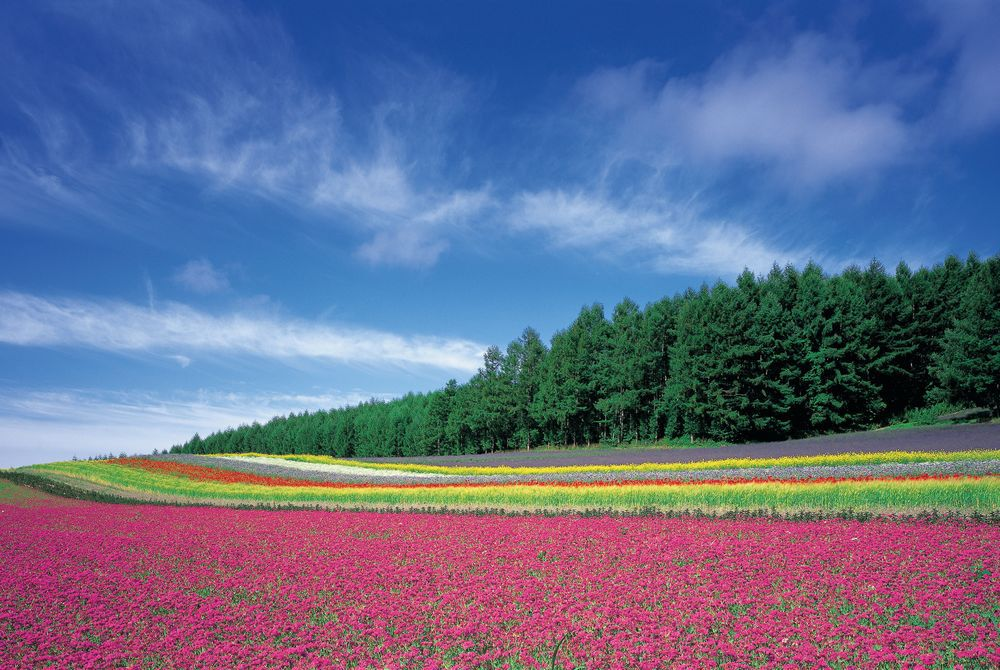Flower Fields, Biei, Japan