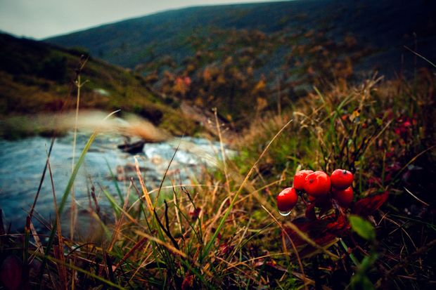 Forage for wild berries with a local guide