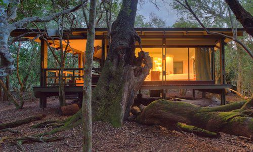 Forest Lodge, Phinda