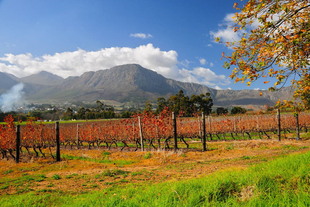 Franschhoek, the Winelands