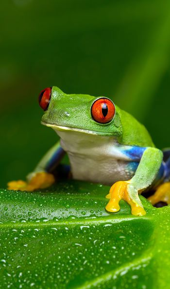 Frog in the Amazon Jungle