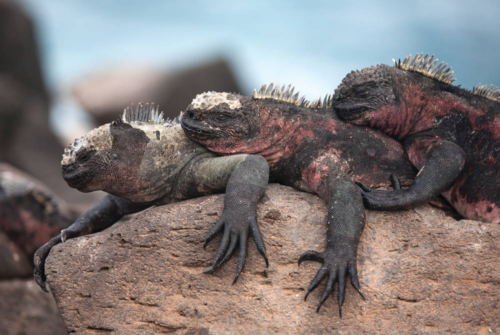 Galápagos with Silversea