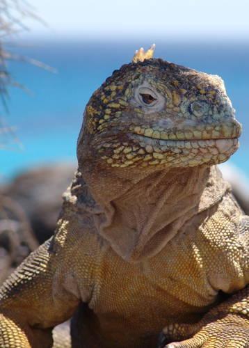 Galapagos wildlife (credit: Pikaia Lodge)