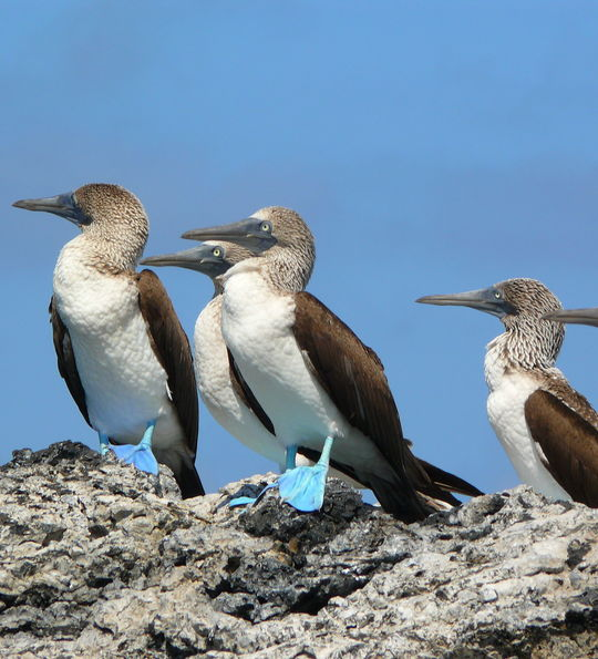 Galapagos wildlife (credit: Pikaia Lodge)